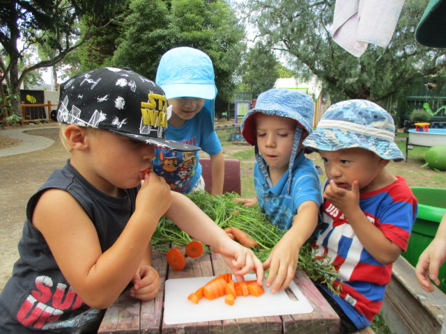 Harvesting and eating our own carrots
