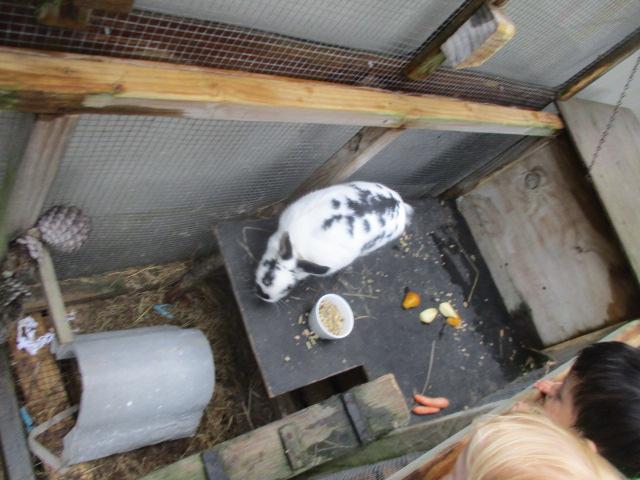 Feeding our new rabbit Derp