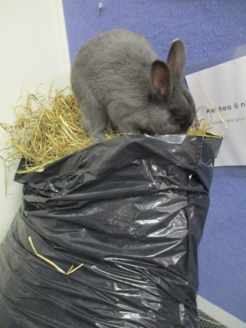 Introducing our new rabbit Pepper